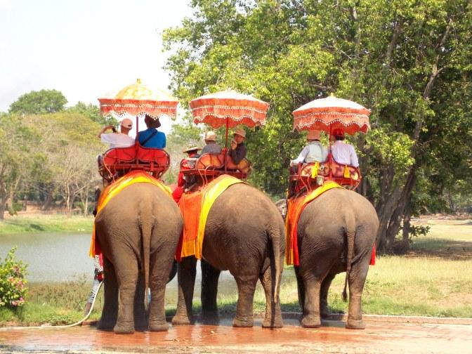 People Elephant Trekking in Ayutthaya
